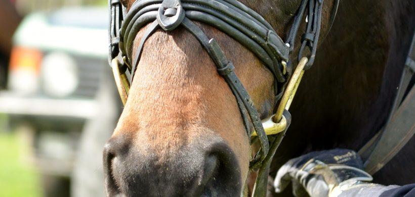 Vets highlight welfare issue of tight nosebands