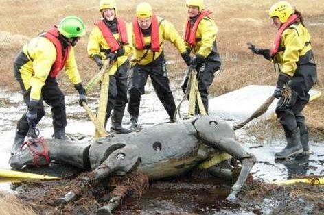 Emergency Horse Rescues